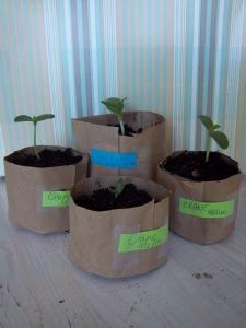 paper bag pots