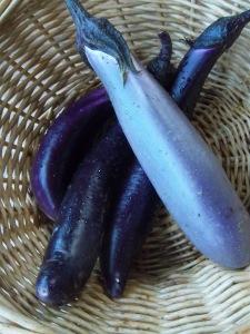 Ping Tung Eggplant